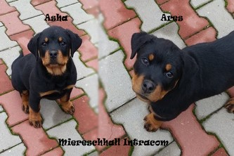 Ares Miereschhall Intracom