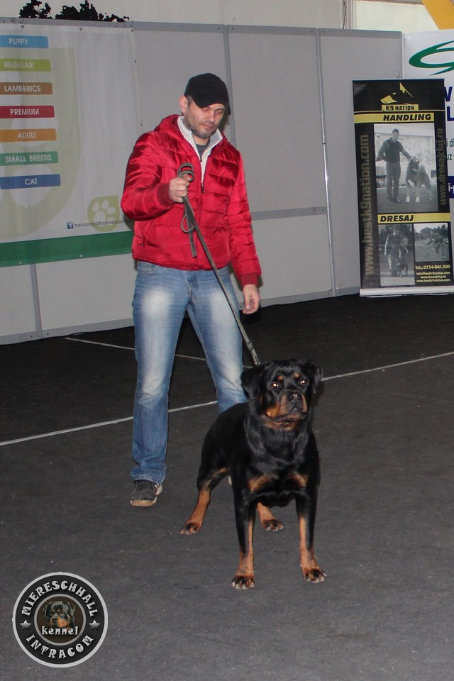 Campion Romania Miereschhall Intracom Rottweiler